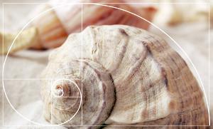 sstem Fibonacciego - złoty podział