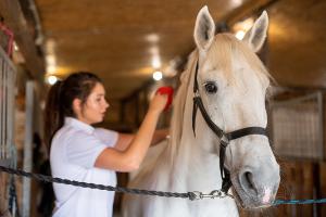 koń wyścigowy - opieka