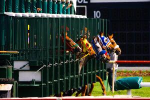 wyścigi konne - start z boksów